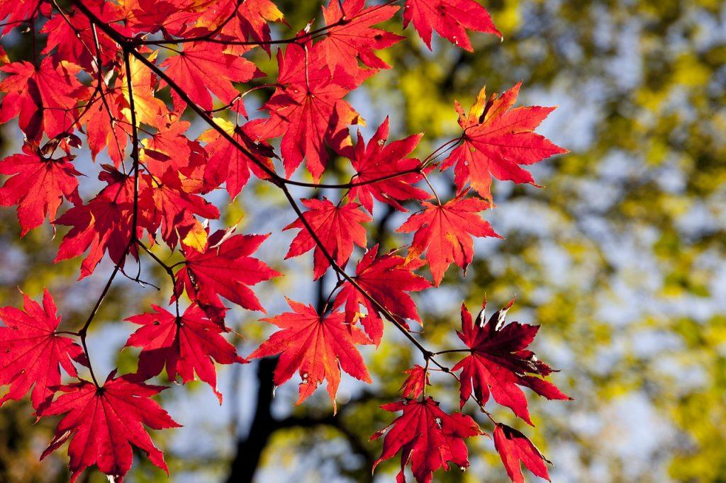 7 arbres d'ombrage à croissance rapide pour réduire votre facture d'électricité