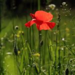 Entretenir le jardin d'été